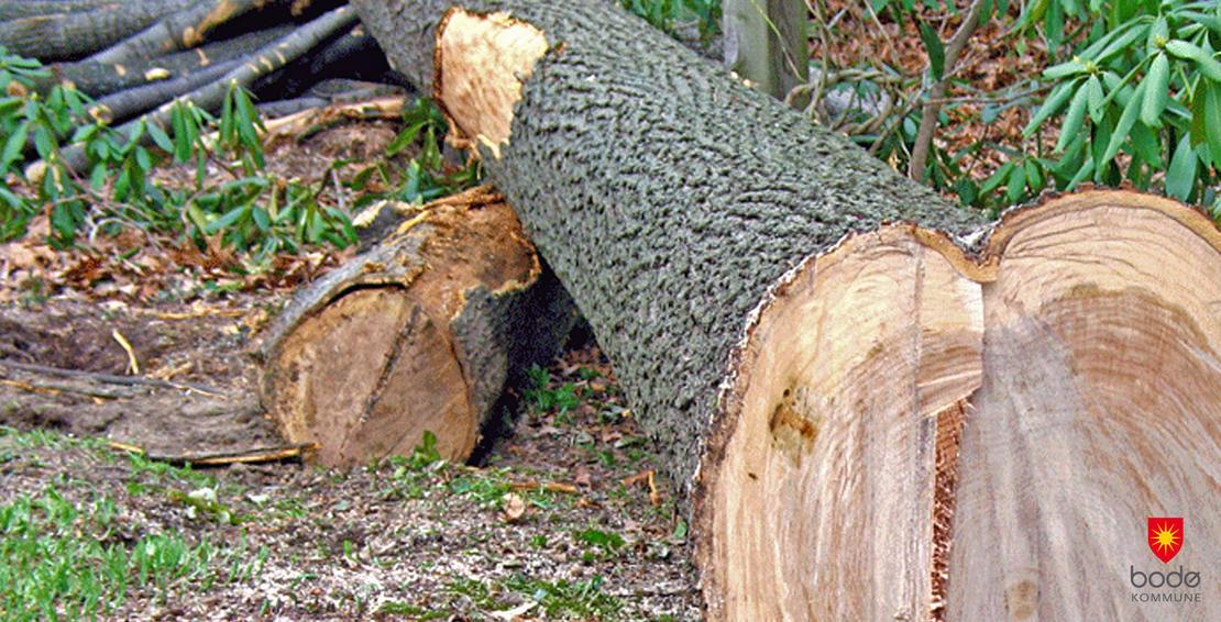 Felte trær